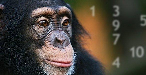 http://ecowars.tv/uploads/posts/1412195081_shimpanze.jpg