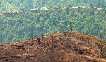 Вырубка лесов и продовольственный кризис угрожают Мьянме