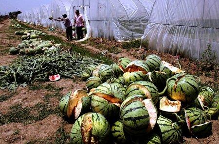 2011 - год окружающей среды в Китае