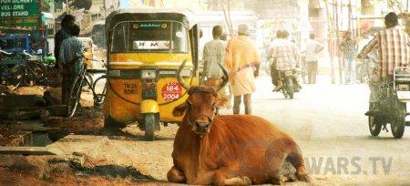 В Индии самый плохой воздух