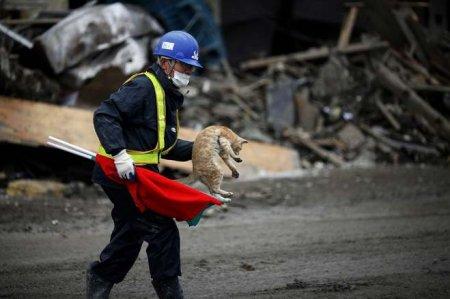 Могут ли животные предсказывать природные катастрофы?