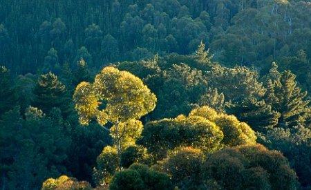 Электричество от деревьев