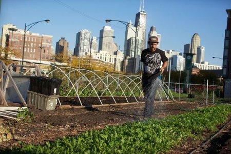 В зеленое будущее через городское земледелие
