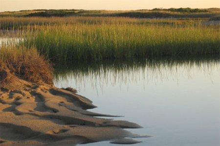Солончаки на берегу моря способны замедлить потепление климата