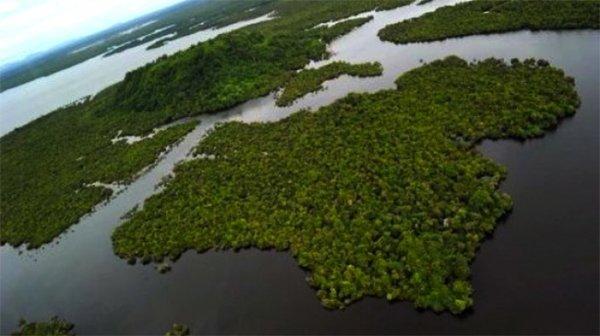 С начала 20 века уничтожена половина болот планеты