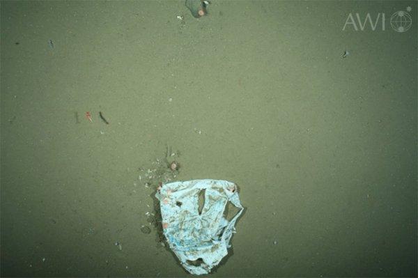 В глубинах Арктики увеличилось количество пластиковых отходов