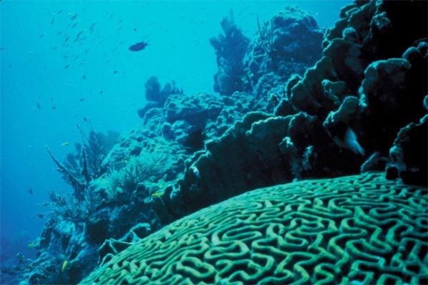 Единственный коралловый риф Швеции под угрозой исчезновения