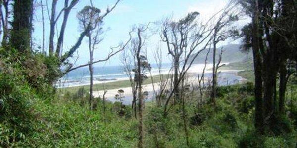Деревья-гиганты погибают из-за изменения климата