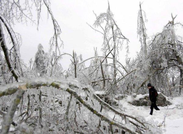 О последствиях метелей и похолодания в Словении