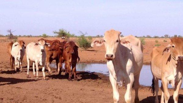 Засуха в Квинсленде признана самой сильной в истории Австралии