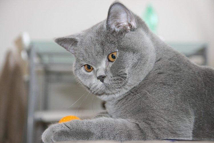 13% британских кошек зарегистрировали на FaceBook